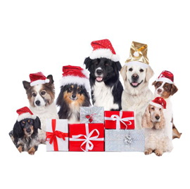 Dog Christmas Cards Christmas Dog Toys Everything Christmas